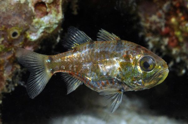 Nine potentially new marine species discovered on bali for New fish discovered