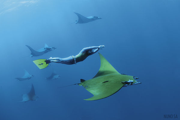 Diver with Devil Rays in the Azores
