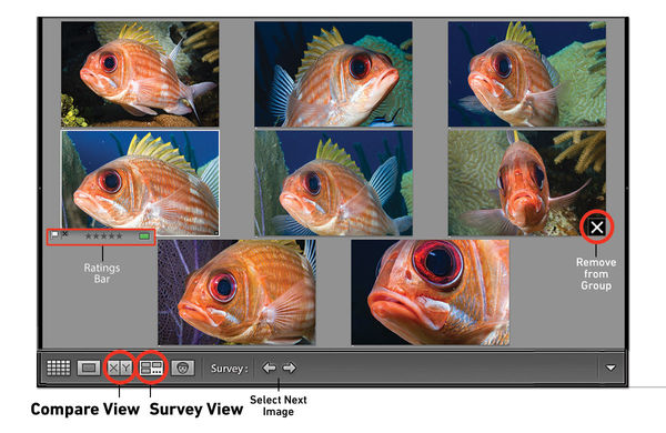 Adobe Lightroom Tutorial: How To Compare And Survey Photos