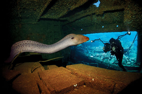 Scuba Diver and Eel in the Chrisoula K Shipwreck, Red Sea