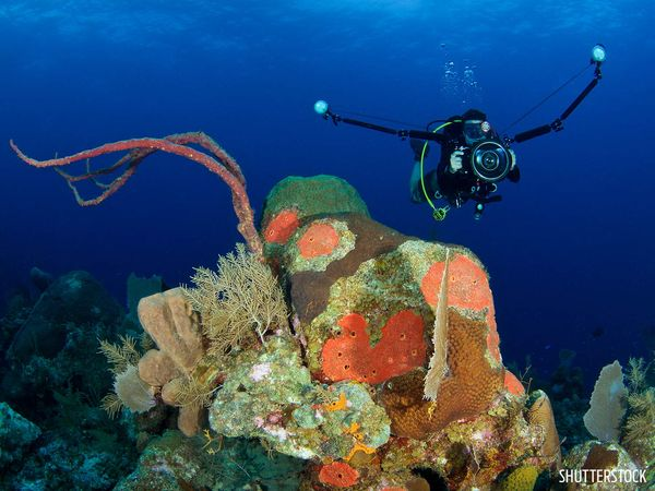 Underwater Photographer Diving in Cayman Islands