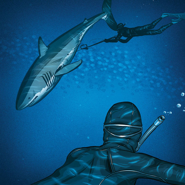Illustration of free divers tagging a shark.