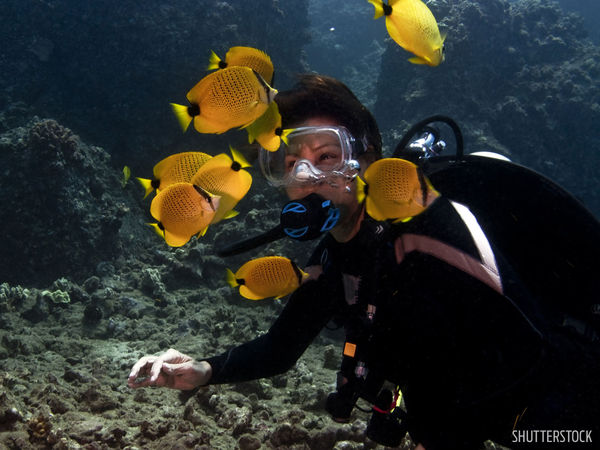 hawaii maui scuba diving beginner dive underwater butterflyfish