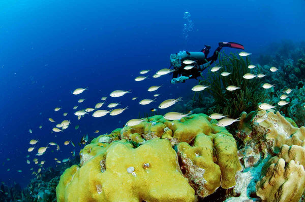 Explore the Award Winning Island of Bonaire with Divi Dive