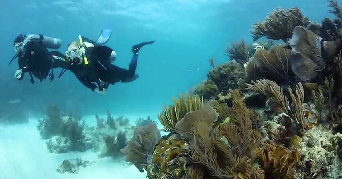 Become A Certified Scuba Diver With NAUI | Scuba Diving