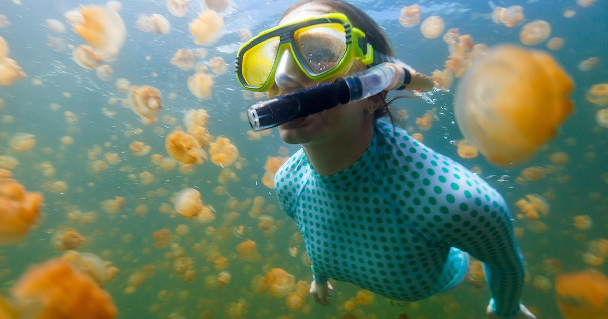 Palau's Jellyfish Lake Reopens to Tours after Rebound in Jellyfish Population