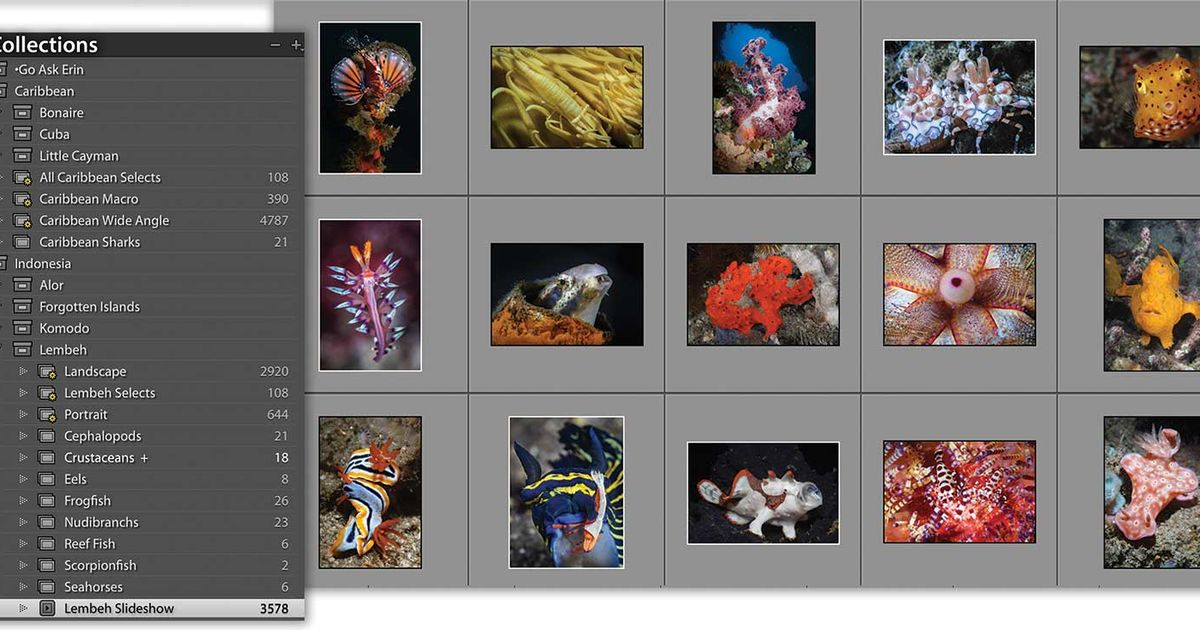 How to Use Lightroom Collections to Enhance Your Photo-Editing Workflow