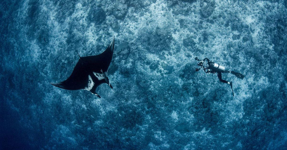 Dive with Maldivian Mantas: All Aboard Four Seasons Explorer for an Expedition with the World's Leading Manta Ray Experts