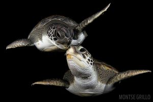 scuba diving with green sea turtles in Canary Islands
