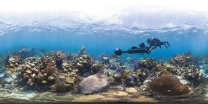 Survey Glover's Reef Bleaching