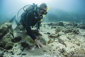 Scuba diver playing with bluegills Rainbow River Florida
