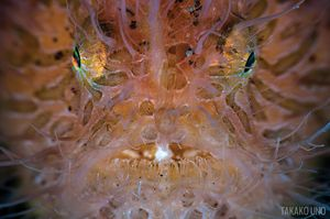 scuba diving with frogfish