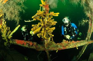 Wreck diving on the Bianca C in Grenada