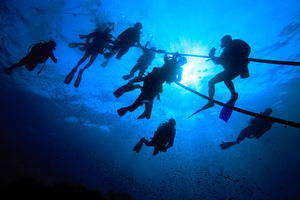 divers at a safety stop