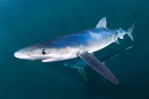 scuba diving with sharks in rhode island