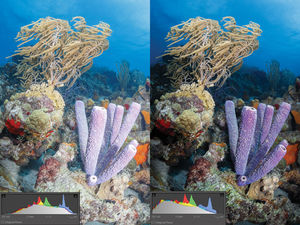 Before and after shot of a coral reef